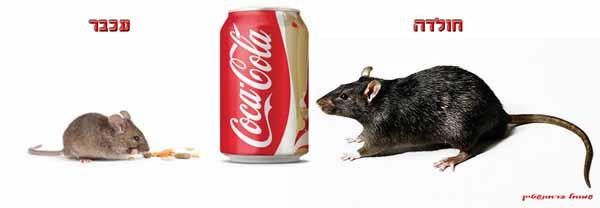 2חולדה-עכבר